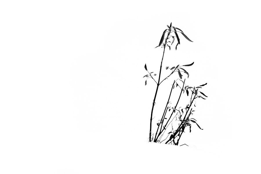 20130128-IMG_5371