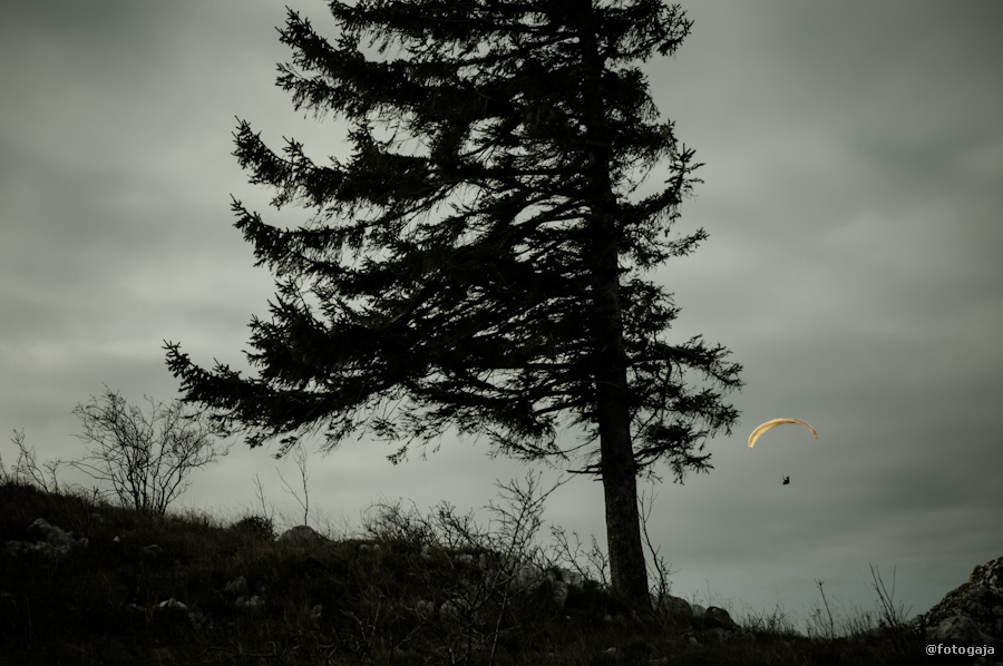 20121117-DSC_0321